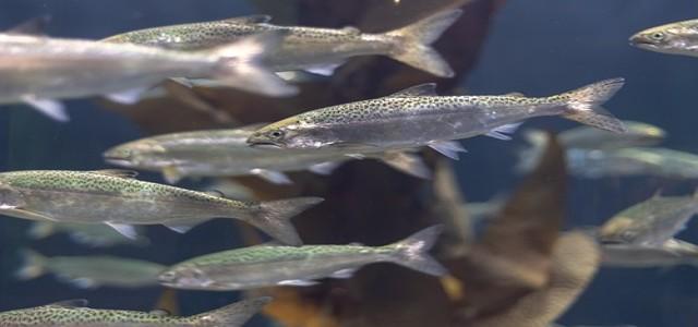 Blue Star Foods Corp acquires Canada-based Taste of BC Aquafarms Inc.